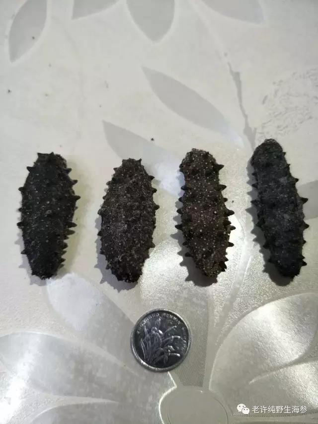 你吃的海参是哪一种?国内海参最全面的养殖方式介绍