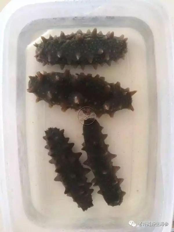 海参鉴别教程7:大连海参跟野生海参对比图