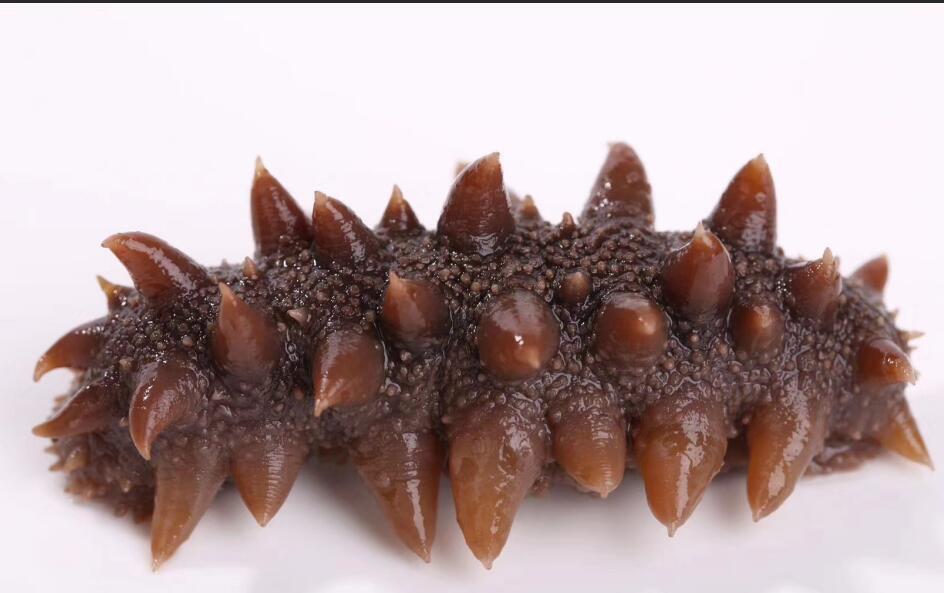 野生海参跟养殖海参怎么鉴别,图解和视频教你判断