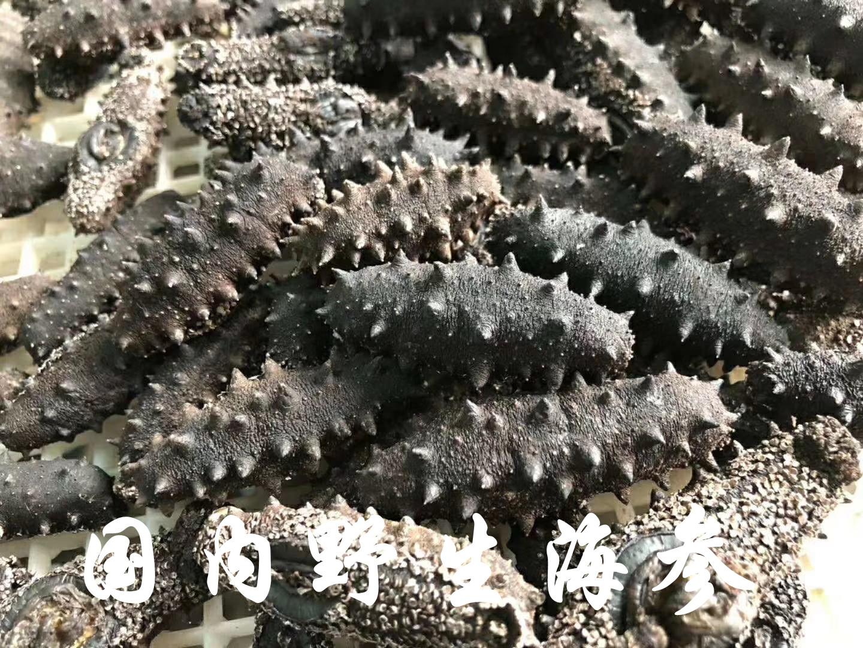 野生刺海参价格,各类海参价格参考