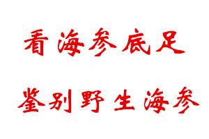 【揭秘】野生海参真有那么多吗?看底足鉴别野生海参还是养殖海参!